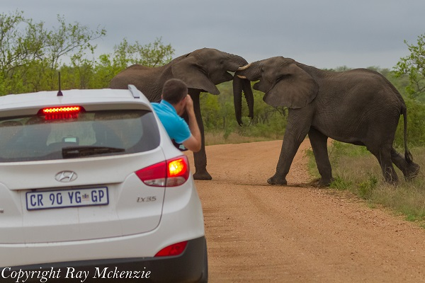 Epic Elephant Battle right in front of us Kruger National Park